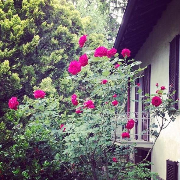 Casa Giacconi, la rosa di maggio