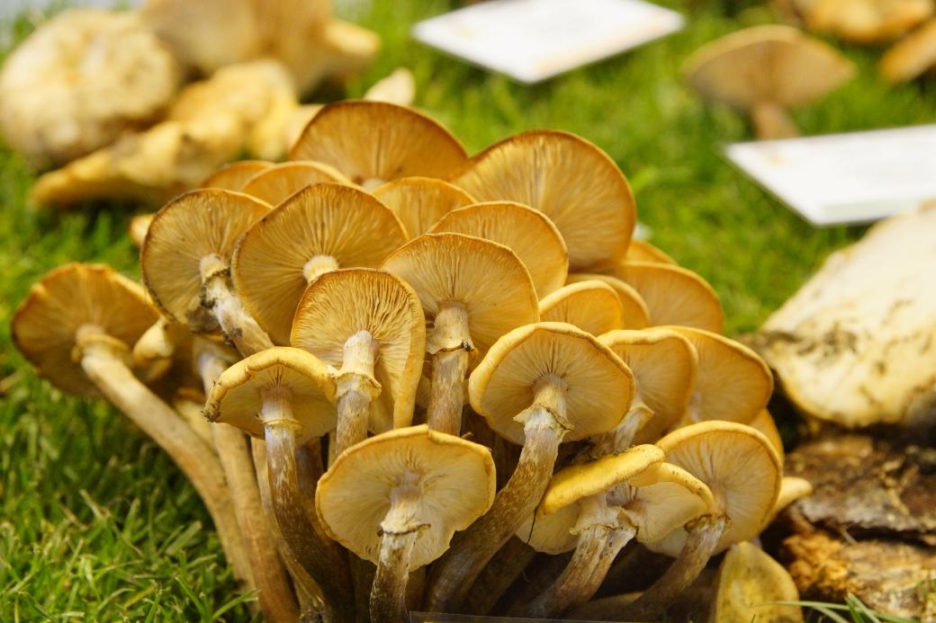 Funghi raccolti nella zona del Lago di Como