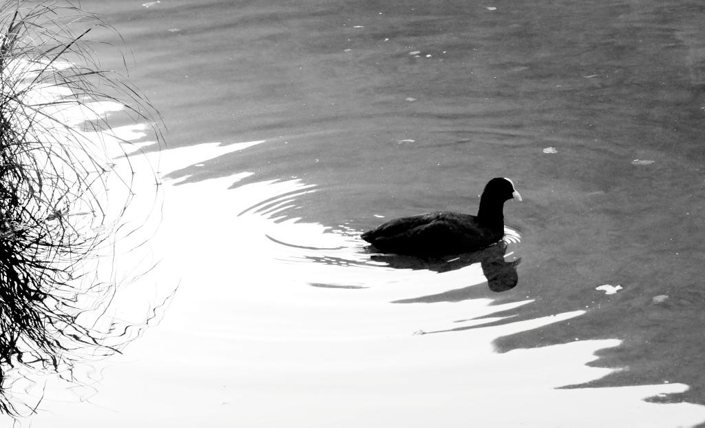 Natura incontaminata sul Lago del Segrino