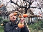 Marco: l'uomo che sussurra all'albero di cachi a Casa Giacconi Bed and Breakfast a Asso, vicino al Lago di Como