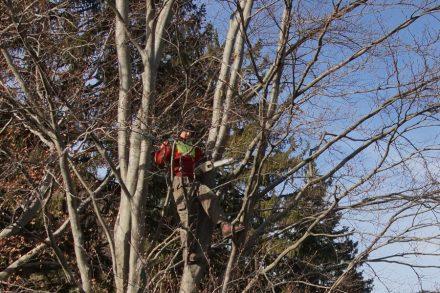 8-tree_climber