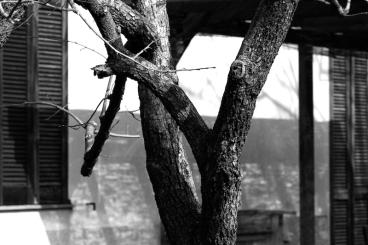 Luci e ombre sotto il bersot a Casa Giacconi B&B